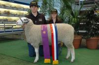 Wingamin 070816. Weighed 72.5 kg @ 4 1/2 months & 42 emd. Winner of the ewe lamb and performance class as well as Champion ewe and Reserve Supreme Shortwool ewe.