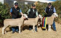 Elders Supreme Prime Lamb Group, Australian Sheep and Wool Show 2006