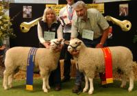 Winning and 2nd place ewe lambs and objective measurement class winners 2006 RAS Feature Show