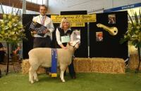 Winning ewe lamb and objective measurement class winner 2006 Royal Adelaide Feature Show. Wingamin also won the ram lamb objective measurement class.