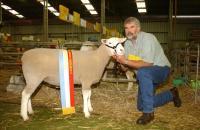 Champion White Suffolk and Supreme Shortwool ewe Hamilton Sheepvention 2004. Wingamin also won Supreme Shortwool Group