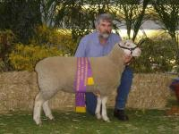 Reserve Champion ewe 2004 Royal Adelaide Show. Winner of the ewe lamb and performance class. 4 1/2 months old. 64.5 kgs 5 mm fat 40 mm emd