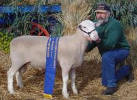 Wingamin 032790 Champion ram Bendigo and Reserve Champion ram Hamilton Sheepvention, 2004
