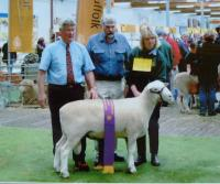 Wingamin 022589 Reserve Champion ram 2003 Royal Adelaide Show.