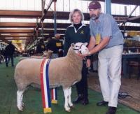 Champion ewe at the 2000 Royal Adelaide Show
