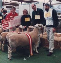 """Supreme Group comprising of Champion ram Wingamin """"Shadow"""" , Champion ewe and ewe from our winning pair"""