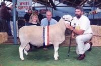 Wingamin 060887 Champion ram 1997 Royal Adelaide Show