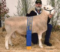 Wingamin 091701 Senior Champion ram at Hamilton Sheepvention 2010