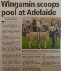 Royal Adelaide Show White Suffolk judging write up Stock Journal
