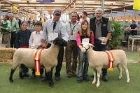 Wingamin 101879 Supreme Shortwool ewe 2011 Royal Adelaide Show