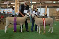 Reserve Champion and Champion ewes at the 2011 Royal Adelaide Show. The Champion ewe went on to win Supreme White Suffolk Exhibit, Supreme Shortwool ewe and Supreme All Breeds Group in the Interbreed judging.