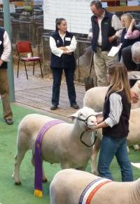 Wingamin 101907 Reserve Champion ram 2011 Royal Adelaide Show