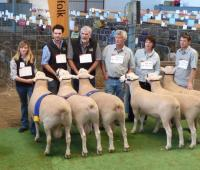 Winning group of 3 rams 2011 Royal Adelaide Show with Wingamin 101886, Wingamin 101867 and Wingamin 101961