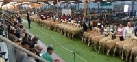 Huge classes at the 2011 Royal Adelaide Show