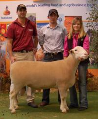 Wingamin 101961 TOP SHELF sold to Rene and Fairburn Studs at the 2011 Royal Adelaide Elite Sale