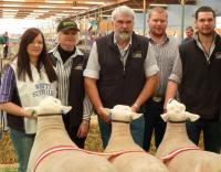 Wingamin Most Successful Exhibitor at Bendigo, Hamilton and The Royal Adelaide Show. (26 exhibitors - 340 entries at the 2012 Royal Adelaide Show)