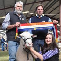 Wingamin TRIFECTA grand Champion ram and Supreme White Suffolk Exhibit, Hamilton Sheepvention 2012
