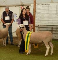 Wingamin 112572 1st July class. Reserve Champion ewe at Bendigo 2012