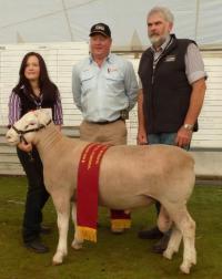 Wingamin 112462 Supreme White Suffolk Exhibit Australian Sheep and Wool Show, Bendigo 2012