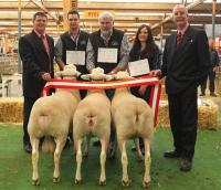 Supreme All Breeds Group 5th year in a row at the 2013 Royal Adelaide Show