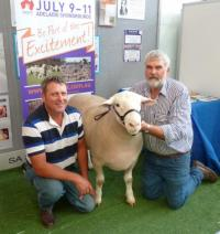 Wingamin 122676 member of our Supreme Pen of 3 rams and Senior Champion ram Hamilton Sheepvention 2013