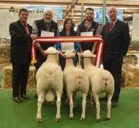 Supreme All Breeds Group 2014 Royal Adelaide Show 6th year in a row