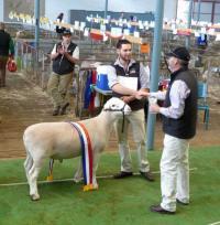 Wingamin 133262 Senior Champion ram at the 2014 Royal Adelaide Show