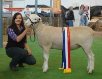 Wingamin 133238 Champion ewe and Reserve Supreme Shortwool at the 2014 Royal Adelaide Show