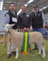 "Wingamin 133033 ""Ripper"" Champion ewe at Bendigo in 2014"