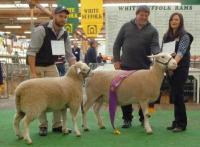 Wingamin 122901 Reserve Champion ewe with lamb at foot at the 2015 Royal Adelaide Show