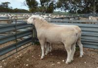 Wingamin 140384 & Wingamin 140364 retained in stud