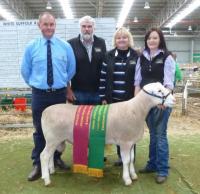 Wingamin 140180 Grand Champion ram and Supreme White Suffolk Exhibit at Bendigo in 2015