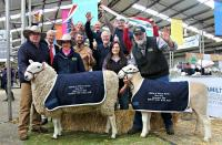 Supreme Interbreed rams Hamilton Sheepvention 2014 with Wingamin 133262