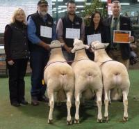 Supreme pen of 3 rams at the 2016 Royal Adelaide Show