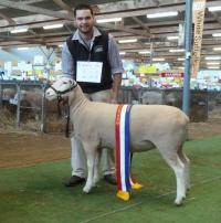 Wingamin 150803 Champion ewe 2016 Royal Adelaide Show. Young, milk tooth August class winner