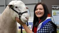 Wingamin 150402 Senior Champion, Grand Champion ram and Supreme White Suffolk Exhibit, Australian Sheep and Wool Show, Bendigo 2016