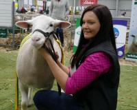 Wingamin 161200 Reserve Champion Ewe at the Australian Sheep and Wool Show, Bendigo and Reserve Champion ewe 2017 Royal Adelaide Show