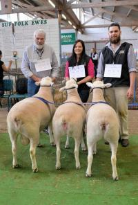 Winning White Suffolk Breeders Group and Champion Interbreed Group 2017 Royal Adelaide Show