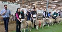 Wingamin171273 1st prize ewe lamb and objective measurement class winner 2017 Royal Adelaide Show. Also went on to win Champion ewe and Supreme Shortwool ewe at the 2018 Royal Adelaide Show