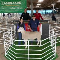 Wingamin 171326 top price at the SAFBI sale in 2018. Son of W 122901 Champion ewe and Supreme WS exhibit in 2013
