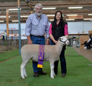 Wingamin 161200 Reserve Champion ewe at Bendigo and the Royal Adelaide Show 2017