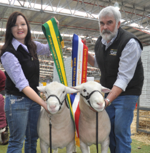 (Left) Wingamin 140302 Junior Champion ram (Right) Wingamin 140180 Senior Champion ram at the Australian Sheep and Wool Show.