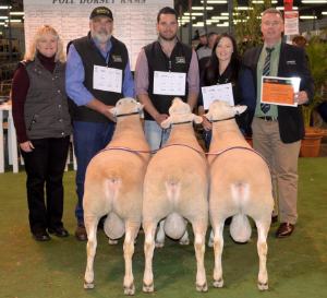 Supreme Interbreed Pen of 3 Rams 2016 Royal Adelaide Show