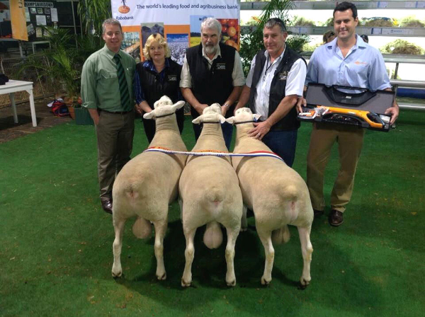 Wingamin 122676 (Senior Champion ram, Hamilton Sheepvention) Wingamin 122814 and Wingamin 122714 (Senior Champion ram & Supreme White Suffolk Exhibit, Bendigo. Retained in our stud) Winners of the Interbreed Pen of 3 rams competition.