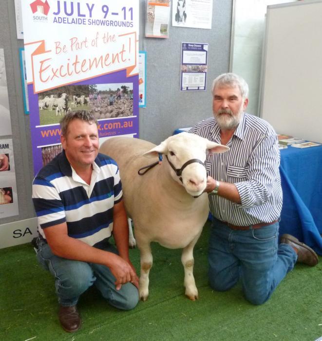 WINGAMIN 122676 Senior champion ram at Hamilton Sheepvention and winning pen of 3 rams at the 2013 Royal Adelaide Show.
