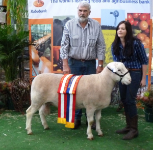 Wingamin 122714 Senior and Grand Champion Ram Supreme White Suffolk Exhibit