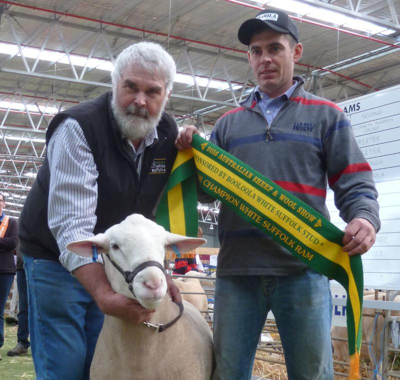Wingamin 150705 Junior Champion ram at the Australian Sheep and Wool Show, Bendigo. Sold for $7,500. Son of Wingamin 140384.