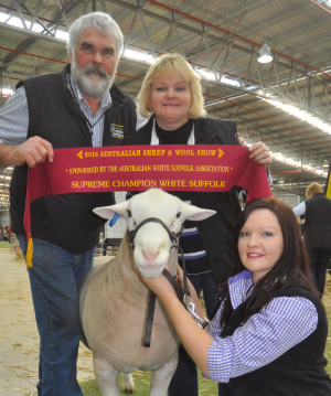 Wingamin 140384 Junior Champion ram, Hamilton Sheepvention (retained in our stud)